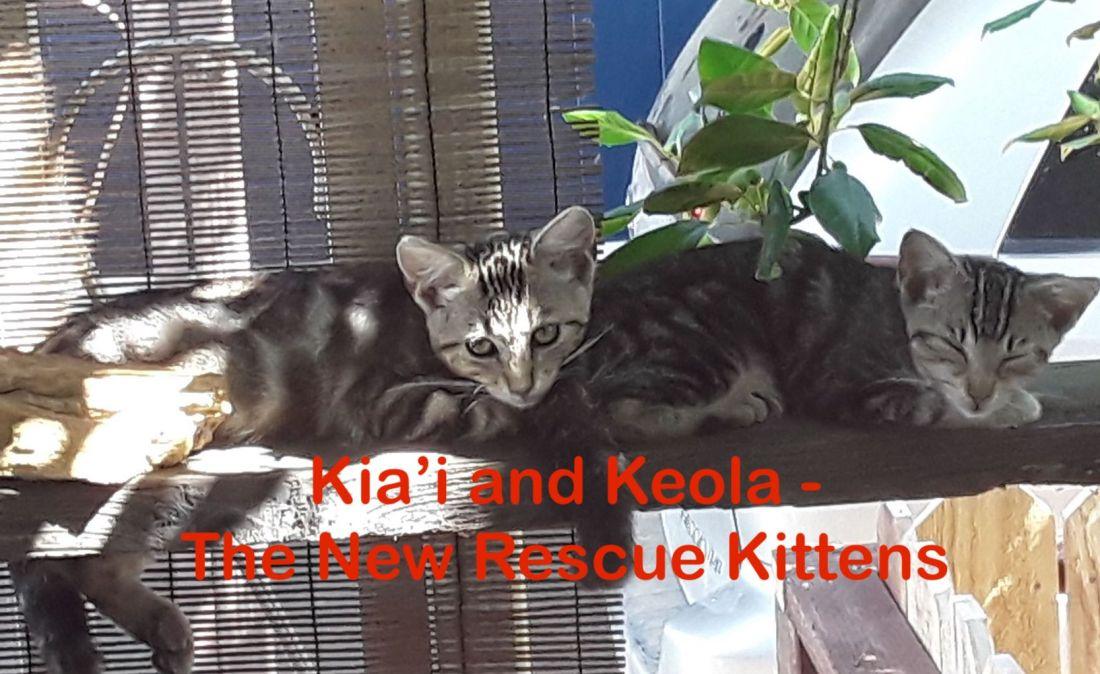Kia'i and Keola